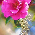 Southern Rose by Donna Bentley