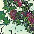 Spanish Grapes by Sarah Loft