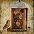 Sparrow On The Feeder by Angie Tirado