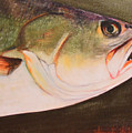 Speckled Trout by Amanda Ladner