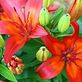 Spectacular Day Lilies by Bruce Bley