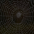 Spider Cobweb  by Cliff Norton