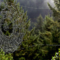 Spider Web Overlook by Michael Roll