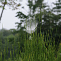 Spider's Net by Linda Seacord