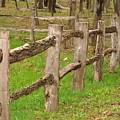 Split Rail Fence by Penny Neimiller