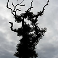 Spooky Tree by Mary Lane
