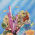 Spotlight Parrotfish by Tanya L Haynes - Printscapes