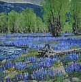 Spread Creek Lupine by Lanny Grant