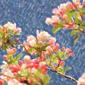 Spring Blossoms by Kathleen Struckle