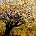 Spring Comes To The Old Cherry El Valle New Mexico by Anastasia Savage Ealy