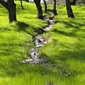 Spring Creek by Juan Romagosa