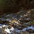 Spring Creek by Larry Darnell