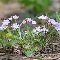 Spring Flowers by Terese Loeb Kreuzer