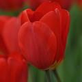 Spring by Gwen Allen
