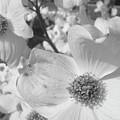 Spring Has Sprung by WaLdEmAr BoRrErO