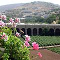 Spring In Bethlehem by Munir Alawi