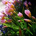 Spring Tenderness by Aliza Souleyeva-Alexander