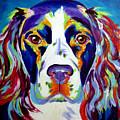 Springer Spaniel - Cassie by Alicia VanNoy Call