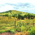 Springerville Sunflowers 0060 by Sharon Broucek