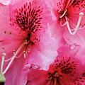 Springtime Azalea by Renee Hong
