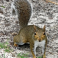 Squirrel 4 by J M Farris Photography
