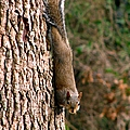 Squirrel 6 by J M Farris Photography