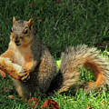 Squirrel Eating Pizza by David Arment