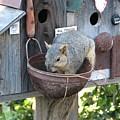 Squirrel Feeding by Patricia Barmatz