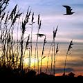 St Augustine Beach Sunset by Addison Fitzgerald