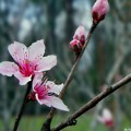 Stages Of Spring by Betty Northcutt