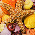 Starfish And Seashells  by Garry Gay