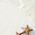 Starfish On Tropical Beach by Mehmed Zelkovic