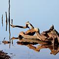 Still Water by Betty LaRue