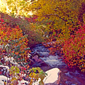Stream In Autumn  by Steve Ohlsen