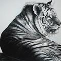 Stripes by Lynda Clark