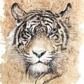 Sumatra by Debra Jones