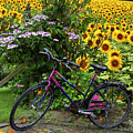Summer Cycling by Debra and Dave Vanderlaan