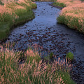 Summer Evening On Palouse River by Jerry McCollum