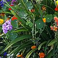 Summer Garden 2 by Marilyn Hunt