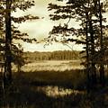 Summer Wetlands by Trisha Dahm