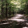 Sun And Shadow Road In Summer  C3pdl by Lyle Crump