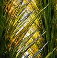 Sun Light Glass by Tom Dowd