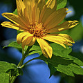 Sun Yellow by Christopher Holmes