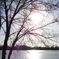 Sundown In Tree by Stacey  Highfield