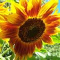 Sunflower 104 by Ken Day