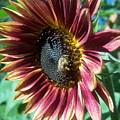 Sunflower 147 by Ken Day