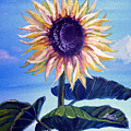 Sunflower by Alban Dizdari