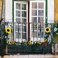 Sunflower Balcony by Carlos Caetano