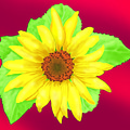 Sunflower On Red Background by Larry Ryan