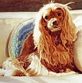 Sunlight On Cavalier King Charles by Phyllis Tarlow